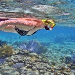 snorkelingdinusapenida