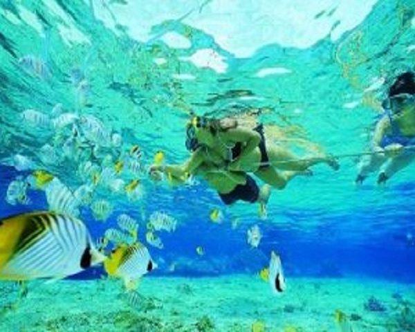 Paket Tour Half Day Snorkeling