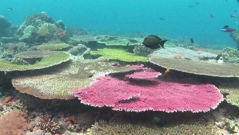SD Point salah satu spot Diving di Nusa Penida