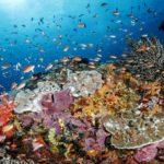 Diving di Toya Pakeh Nusa Penida,