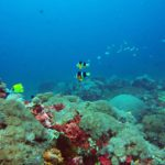 Diving di Toya Pakeh Nusa Penidaa.