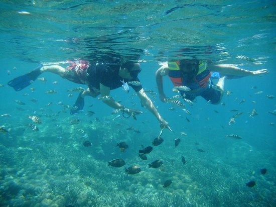 mangrove point @thenusapenida.com